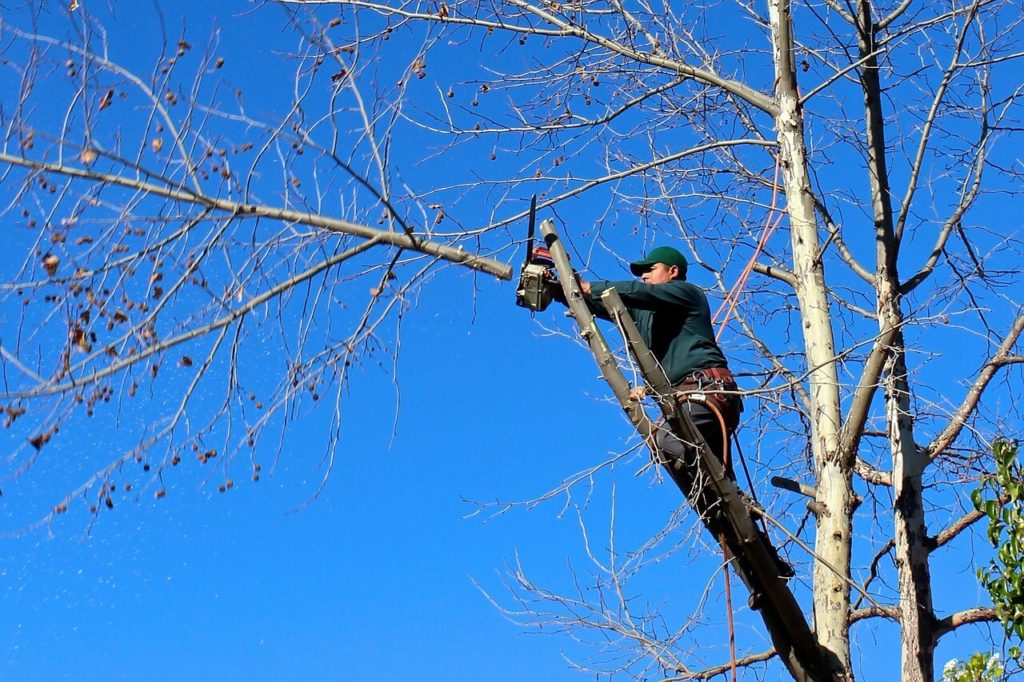 Contact Us-Lutz FL Tree Trimming and Stump Grinding Services-We Offer Tree Trimming Services, Tree Removal, Tree Pruning, Tree Cutting, Residential and Commercial Tree Trimming Services, Storm Damage, Emergency Tree Removal, Land Clearing, Tree Companies, Tree Care Service, Stump Grinding, and we're the Best Tree Trimming Company Near You Guaranteed!