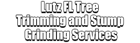 Lutz FL Tree Trimming and Stump Grinding Services Logo-We Offer Tree Trimming Services, Tree Removal, Tree Pruning, Tree Cutting, Residential and Commercial Tree Trimming Services, Storm Damage, Emergency Tree Removal, Land Clearing, Tree Companies, Tree Care Service, Stump Grinding, and we're the Best Tree Trimming Company Near You Guaranteed!