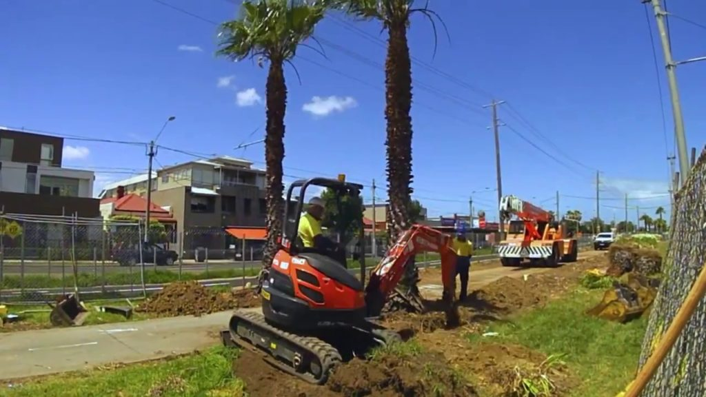 Palm Tree Removal-Lutz FL Tree Trimming and Stump Grinding Services-We Offer Tree Trimming Services, Tree Removal, Tree Pruning, Tree Cutting, Residential and Commercial Tree Trimming Services, Storm Damage, Emergency Tree Removal, Land Clearing, Tree Companies, Tree Care Service, Stump Grinding, and we're the Best Tree Trimming Company Near You Guaranteed!