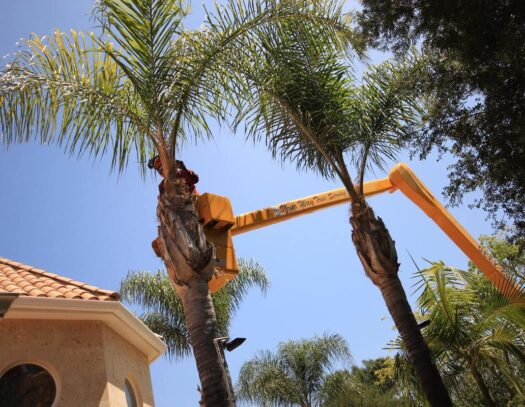 Palm Tree Trimming-Lutz FL Tree Trimming and Stump Grinding Services-We Offer Tree Trimming Services, Tree Removal, Tree Pruning, Tree Cutting, Residential and Commercial Tree Trimming Services, Storm Damage, Emergency Tree Removal, Land Clearing, Tree Companies, Tree Care Service, Stump Grinding, and we're the Best Tree Trimming Company Near You Guaranteed!