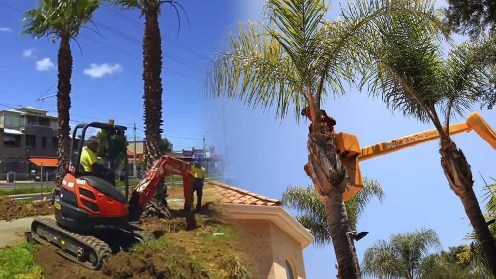 Palm tree trimming & palm tree removal-Lutz FL Tree Trimming and Stump Grinding Services-We Offer Tree Trimming Services, Tree Removal, Tree Pruning, Tree Cutting, Residential and Commercial Tree Trimming Services, Storm Damage, Emergency Tree Removal, Land Clearing, Tree Companies, Tree Care Service, Stump Grinding, and we're the Best Tree Trimming Company Near You Guaranteed!