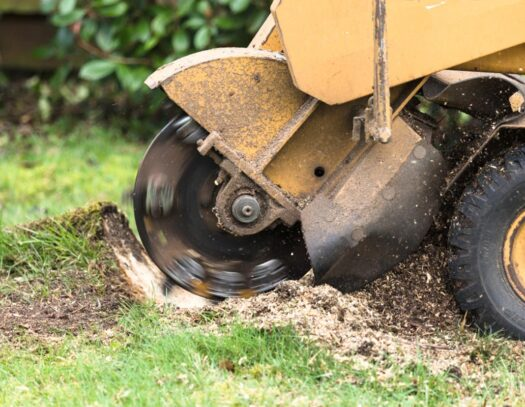 Stump Grinding-Lutz FL Tree Trimming and Stump Grinding Services-We Offer Tree Trimming Services, Tree Removal, Tree Pruning, Tree Cutting, Residential and Commercial Tree Trimming Services, Storm Damage, Emergency Tree Removal, Land Clearing, Tree Companies, Tree Care Service, Stump Grinding, and we're the Best Tree Trimming Company Near You Guaranteed!