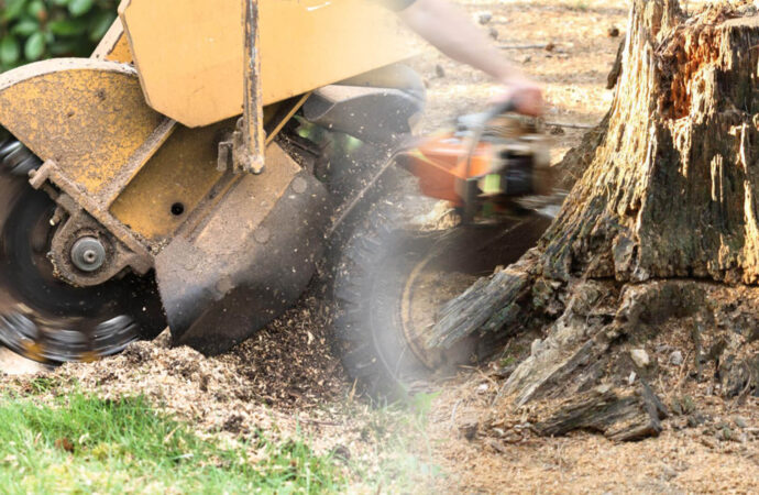Stump grinding & removal-Lutz FL Tree Trimming and Stump Grinding Services-We Offer Tree Trimming Services, Tree Removal, Tree Pruning, Tree Cutting, Residential and Commercial Tree Trimming Services, Storm Damage, Emergency Tree Removal, Land Clearing, Tree Companies, Tree Care Service, Stump Grinding, and we're the Best Tree Trimming Company Near You Guaranteed!