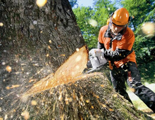 Tree Cutting-Lutz FL Tree Trimming and Stump Grinding Services-We Offer Tree Trimming Services, Tree Removal, Tree Pruning, Tree Cutting, Residential and Commercial Tree Trimming Services, Storm Damage, Emergency Tree Removal, Land Clearing, Tree Companies, Tree Care Service, Stump Grinding, and we're the Best Tree Trimming Company Near You Guaranteed!
