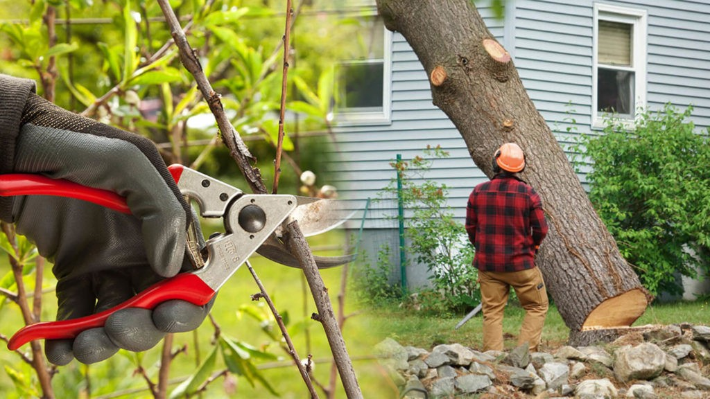 Tree pruning & tree removal-Lutz FL Tree Trimming and Stump Grinding Services-We Offer Tree Trimming Services, Tree Removal, Tree Pruning, Tree Cutting, Residential and Commercial Tree Trimming Services, Storm Damage, Emergency Tree Removal, Land Clearing, Tree Companies, Tree Care Service, Stump Grinding, and we're the Best Tree Trimming Company Near You Guaranteed!